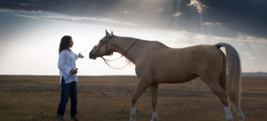 Leadership Lessons From Watching a Horse Whisperer